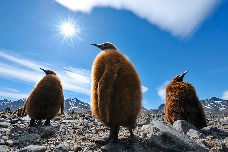 reisen feuerland antarktis